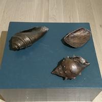 Bronze Shells